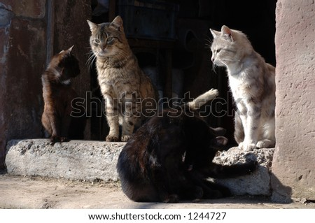 cats in front of a farmhouse, Vosges Mountains, Alsace, France