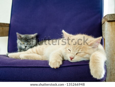 cats / kittens sleeping indoor - stock photo