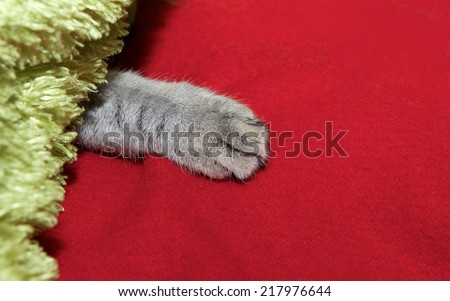 Cats leg fragment photo, cats leg on a red background, artistic photo, playing cat, cat under pillow, cats leg - stock photo