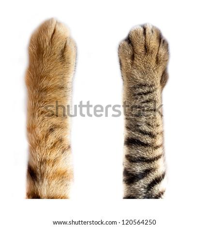 cats paw on white background - stock photo