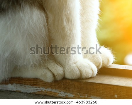 cats paws on the window balcony background