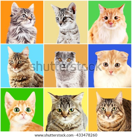 Cats portraits on bright backgrounds