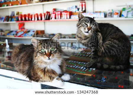 Cats sit on the shelves - stock photo