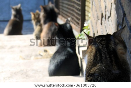 cats sitting in line or queue
