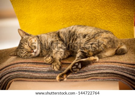 Cats sleep - stock photo