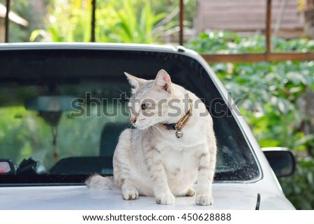 cats sleeping and standing on car ,Table