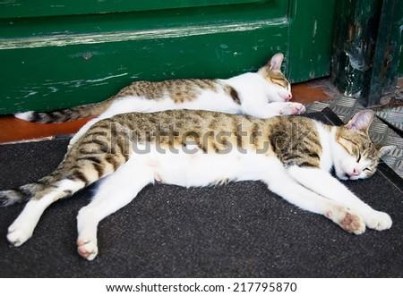Cats sleeping in front of a wooden door. - stock photo