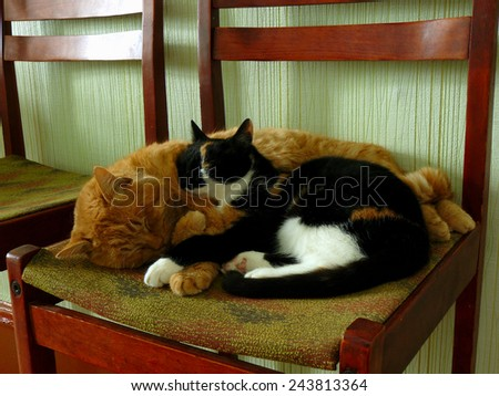 cats sleeping on the chair - stock photo