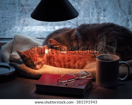 Cat under table stock images royalty free images for Sleeping with window open in winter