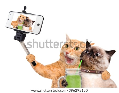 Cats taking a selfie with a smartphone - stock photo