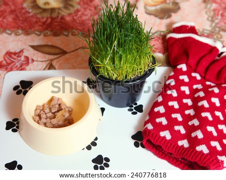 cats things dress food and pot grass - stock photo