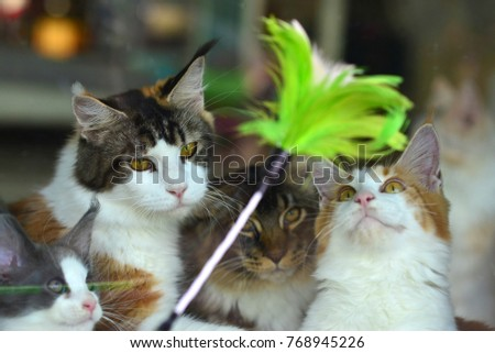 Cats Trying Catch Green Toy Outside Stock Photo Royalty Free
