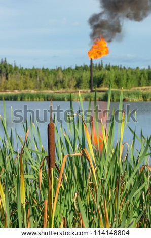 Cattail torch to the oil in the background. Pollution. - stock photo