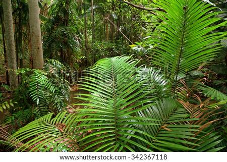Cattana Wetlands, Cairns, Queensland, Australia - stock photo