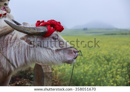 Cattle - stock photo