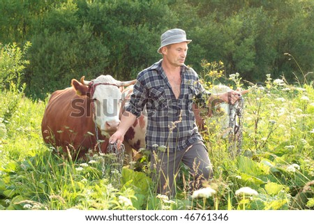 cattle be led, cowboy and his cows struggle through thicket