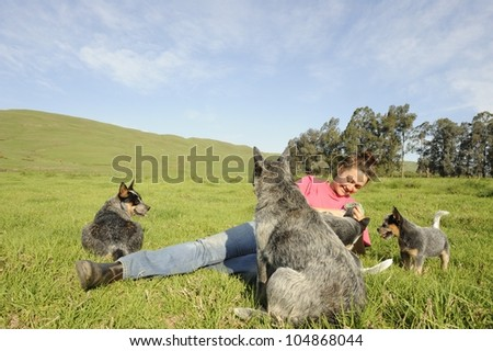 Cattle dog family and admirer