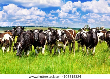 Cattle eating grass in the meadow - stock photo