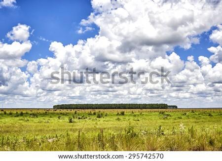 CATTLE FARMS SOURROUNDING THE ROAD HEADING NORTH, ESTEROS DEL IBERA, CORRIENTES, ARGENTINA - NOV 26, 2014: Cattle farm sourrounding the road heading nort  in the Ibera Wetlands, Corrientes Province - stock photo