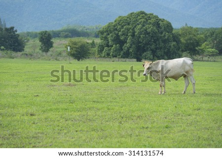 cattle field, nature park outdoor for animal farm - stock photo