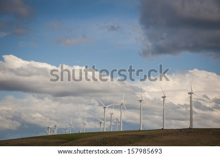 Cattle grazing beneath wind turbines in Washington state