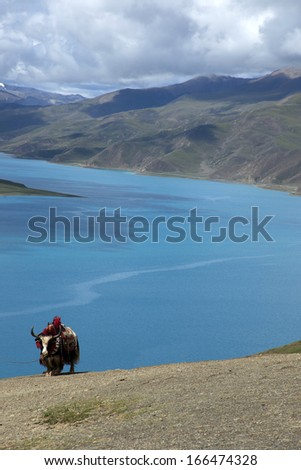 Cattle mountain lake in Tibet - stock photo