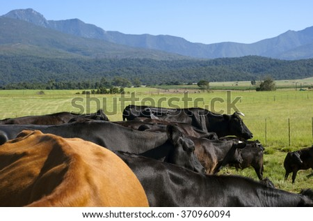 Cattle Ranch - stock photo