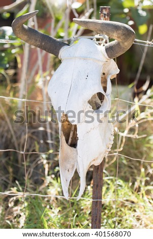 cattle skull hanging on a fence - stock photo