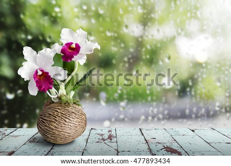 Cattleya orchid on wooden table in rainy day