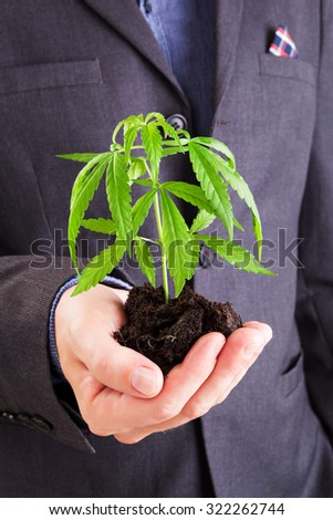 Caucasian handsome man in suit holding young cannabis plant with soil in his hand. Drug dealer. - stock photo