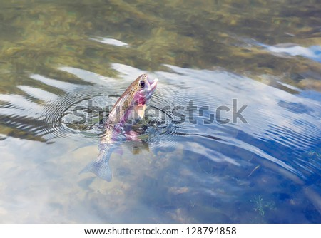 Caught by the bait of Rainbow Trout - stock photo