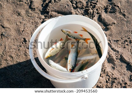 caught fish is in a white plastic bucket - stock photo