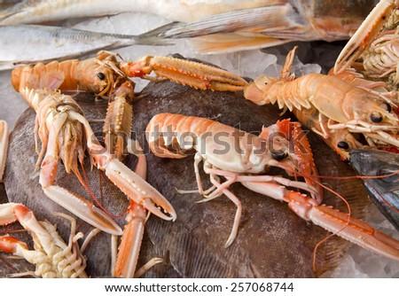 Caught shrimps on ice - stock photo