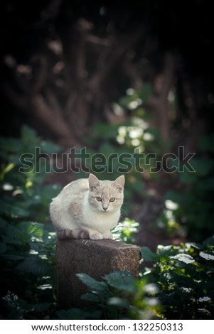 Cautious white cat in the forest