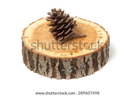cedar cone on wood slice, isolated on white - stock photo