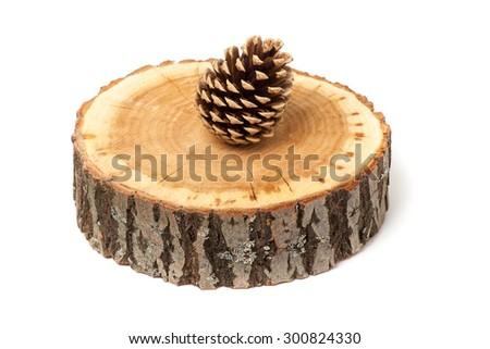 cedar cone on wood slice, isolated on white - stock photo