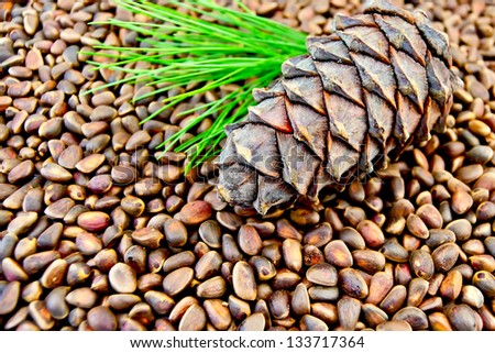 Cedar cone, twig with green needles on the texture of cedar nuts - stock photo