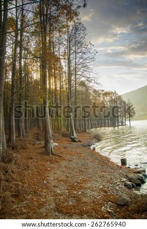 Cedar forest lake - stock photo