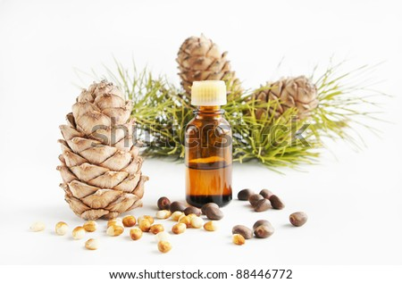 Cedar nuts and oil - stock photo