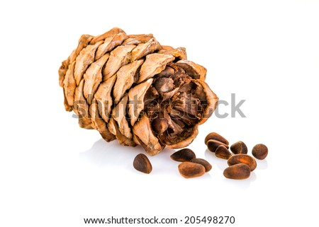 cedar pine cone with nuts isolated on white background - stock photo