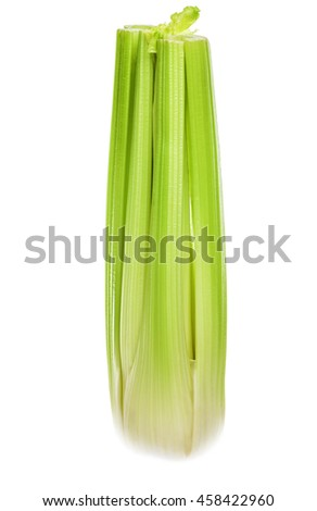 Celery highlighted on a white background. - stock photo