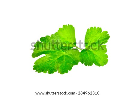 Celery leaf closeup on white background - stock photo