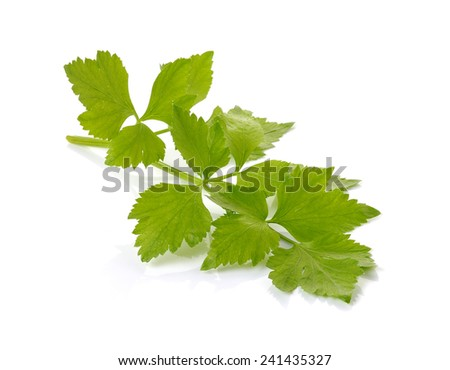 Celery on over white background