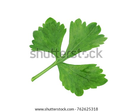 Celery vegetable  isolated on white background this has clipping path.