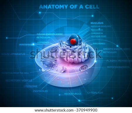 Cell anatomy cross section on an abstract blue technology background  - stock photo