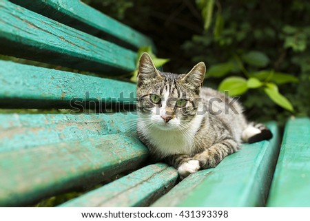 cells resting on a bench