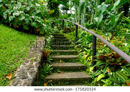 Cement steps lead into the green depths of a botanical garden on the island of Saint Vincent in the Caribbean. - stock photo