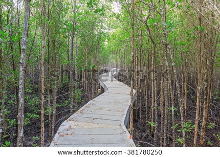 cement walk way into the mangrove forest