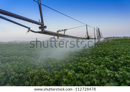 Center pivoting irrigation system over a ripe cotton field. - stock photo
