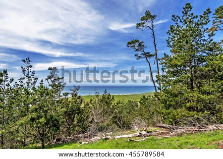 Central California Coast Pot Pine Forest, in the Fiscalini Ranch Preserve, near Cambria, CA. Conservation of the forest and creating public access, providing hiking, biking, and walking trails. - stock photo